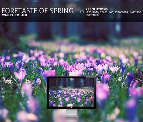 foretaste of spring - Wallpape