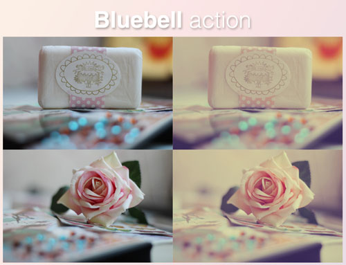 Bluebell action by EliseEnchanted