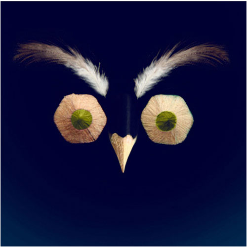 o.Owl