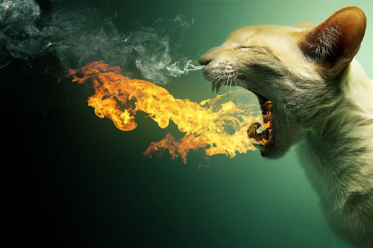 Flaming Cat + PSD
