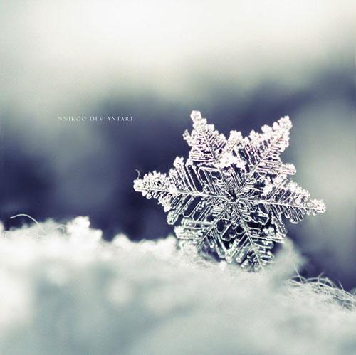 The Winter Dream