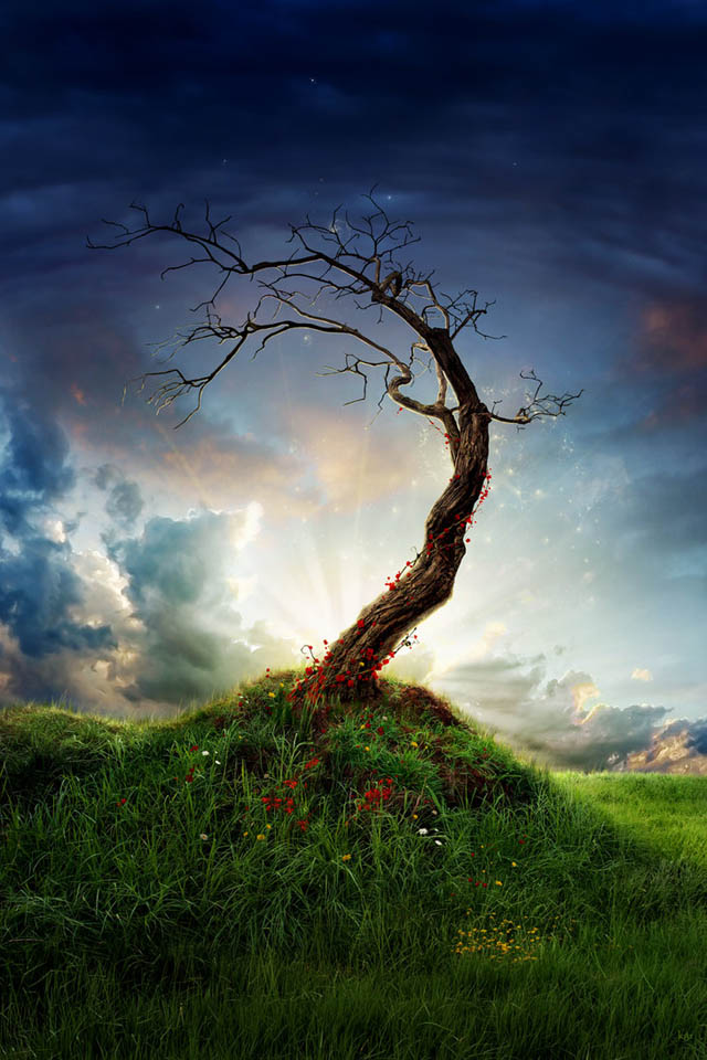 tree_photomanipulation_1