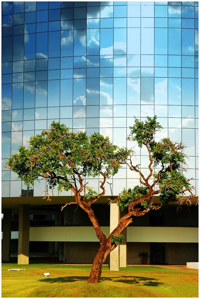 Next Tree