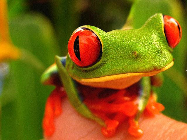Rainforests eyes