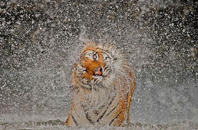 wildlife-photography-bshk-34