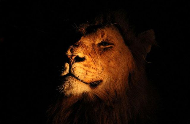 wildlife-photography-bshk-35