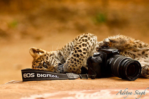 Canon as wildlife sees it - 3