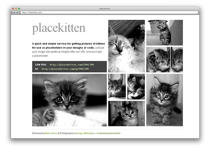 placekitten-4