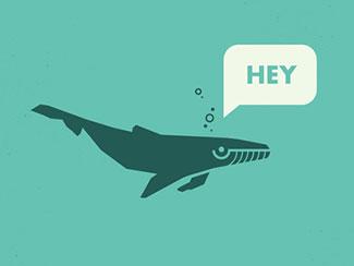 Hey Whale Hey