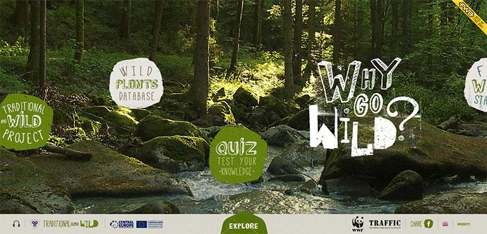 why-go-wild-3