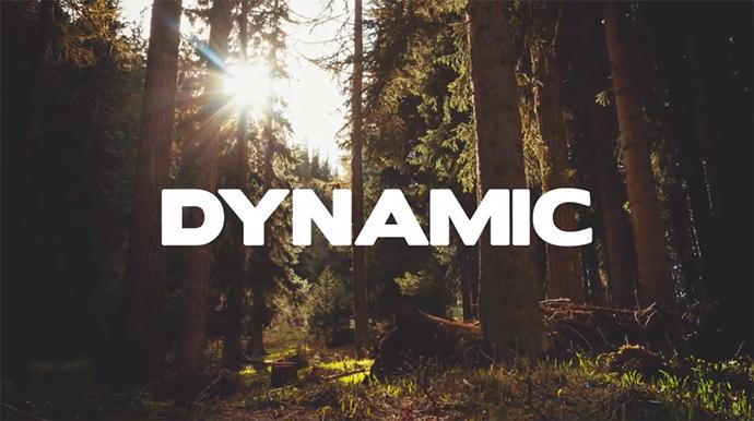 dynamic-gallery-31