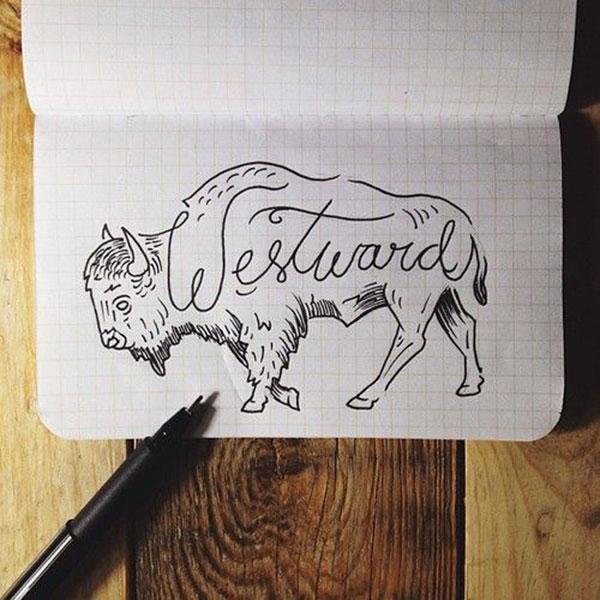 bison sketch