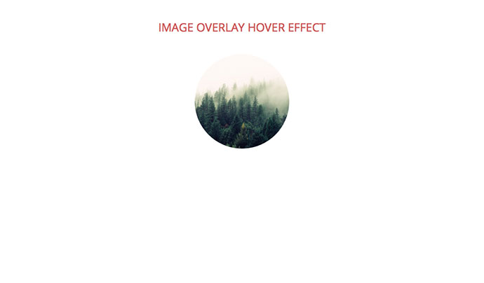 Image Overlay Hover Effect
