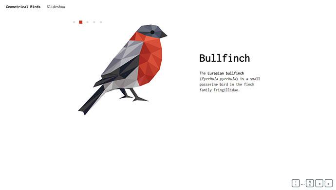 Geometrical Birds - slideshow
