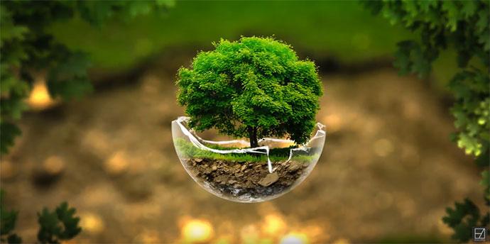 The Tree Sphere