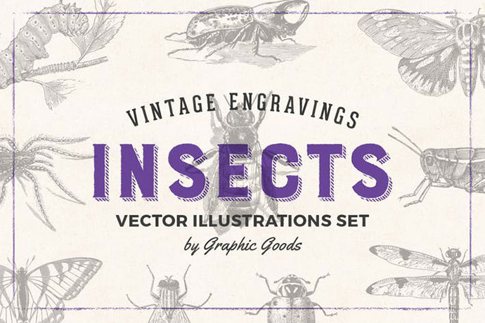 Insects - Vintage Engraving Illustration Set