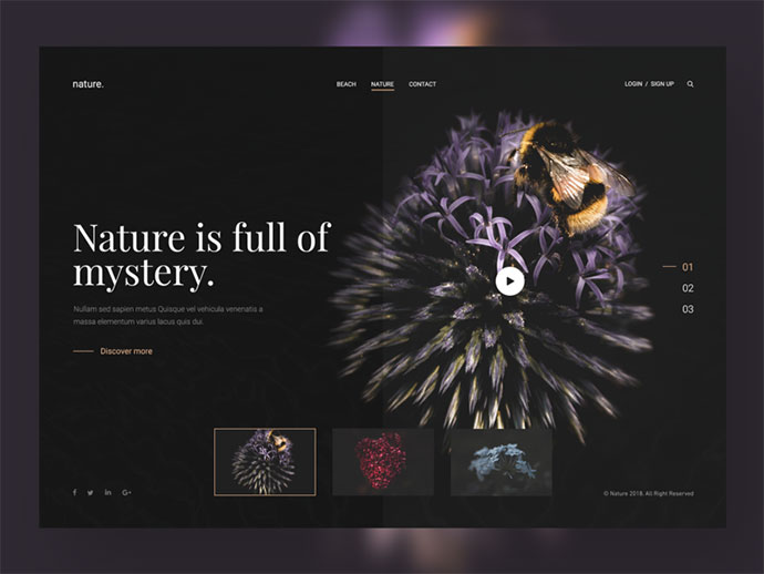Nature Website Design