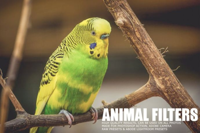 17 Animal Photography Lightroom Presets